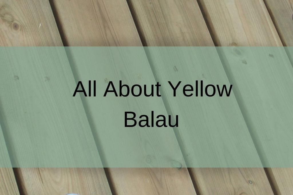 yellow balau petal
